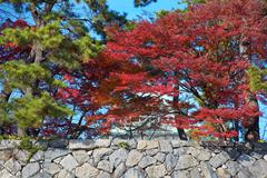 Stone wall with trees Stock Photos
