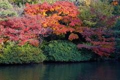 oriental landscape - stock photo