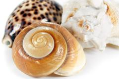 three sea shells - stock photo