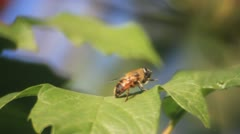 Flowers fly on the leaf Stock Footage