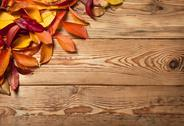 Stock Photo of autumn background