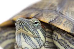 Portrait of a turtle Stock Photos