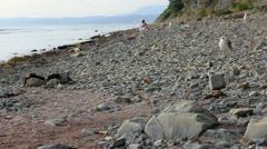 Wild stony beach landscape Stock Footage