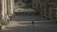 History & culture, Ephesus ruins, cat crosses mosaic tile floor, long shot Stock Footage