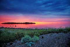 wild grass at sunset - stock photo