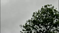 Rain wind and scudding clouds and a tree Stock Footage