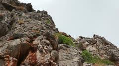 Wild goats in Sa Calobra, Mallorca Island Stock Footage