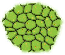 Schematic representation of living cells Stock Illustration