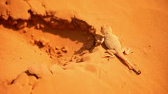 Lizard on golden sand - stock footage