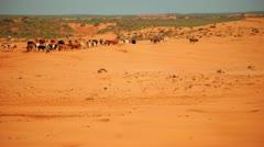 Herd of cows in desert. Animals on sand dunes. Desert farm landscape Stock Footage