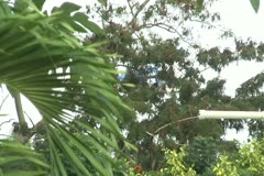 Police helicopter hidden behind trees Stock Footage