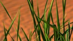 Green grass in desert Stock Footage
