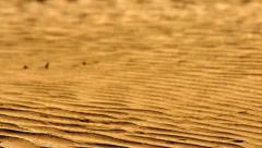 Desert sand closeup. Orange sand dunes. Wave pattern on sand in desert Stock Footage