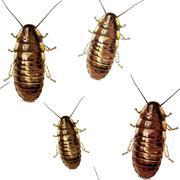 Cockroaches texture Stock Illustration
