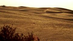 Desert landscape with dry bush. Dry plant in desert sand dunes Stock Footage
