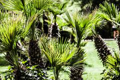 green palm leaves in jungle - stock photo