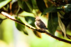 small young bird sitting on tree - stock photo