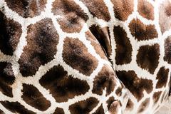 giraffe skin background - stock photo