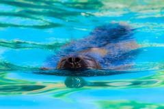 Close-up of a harbor seal coming out of the water with details on whiskers an Stock Photos