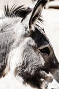 head of a donkey in zoo - stock photo