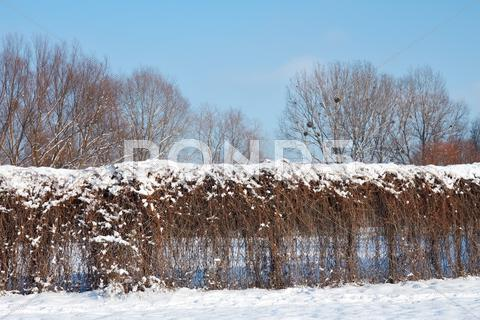 Stock photo of fence of dried lianas in winter park