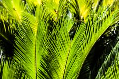 Stock Photo of green palm tree leaf as a background