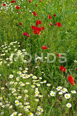 Stock photo of wild spring flowers