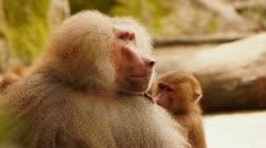Monkey #01 Stock Footage