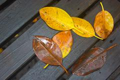 The wither leaves fallen on wet wooden background. - stock photo