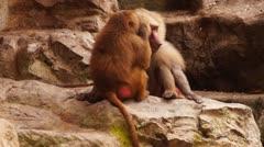 Monkeys #02 Stock Footage