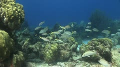 Coral reef Fish Bonaire Caribbean Stock Footage