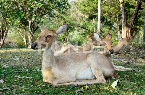 Stock photo of Antelope