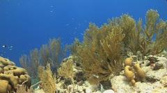 Coral reef Bonaire Caribbean, underwater reef Tripod scene Stock Footage