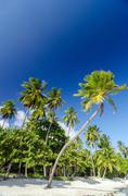 White Sand and Palm Trees Stock Photos
