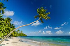Palm Tree over Beach Stock Photos