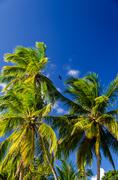 Palm Tree and Blue Sky - stock photo