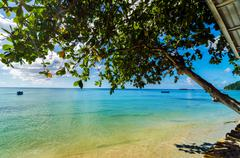 Tree over Caribbean Sea - stock photo