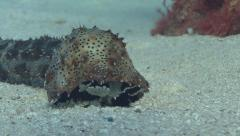 Bizarre underwater animal sequence Stock Footage