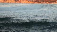 Seals swimming, La Jolla cove Stock Footage