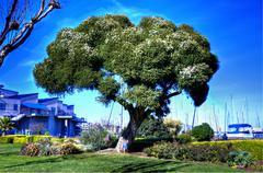 Shade Tree Stock Photos