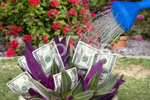 Stock photo of money plant being watered