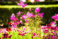 Stock Photo of pretty manicured flower garden