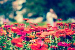 pretty manicured flower garden - stock photo
