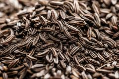 cumin seeds texture, full frame background - stock photo
