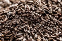 Cumin seeds texture, full frame background Stock Photos
