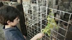 Hispanic Kid Feeds Donkey Alfalfa Herbs Stock Footage
