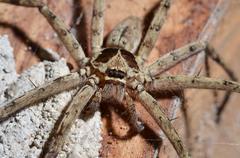 detail of a tarantula spider - stock photo
