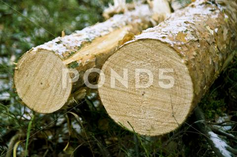 Stock photo of chopped down tree