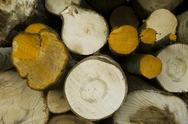 Stock Photo of logs storage