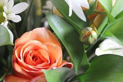 Rose and rosebud Stock Photos